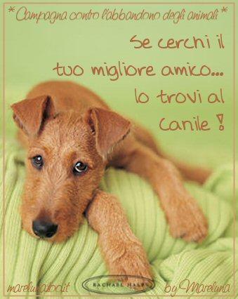 http://www.laspiaggiadeisogni.it/postcards/mare_cani2.jpg